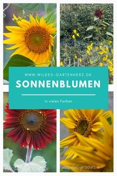 Sonnenblumen - Pflanzenportrait und verschiedene Sorten
