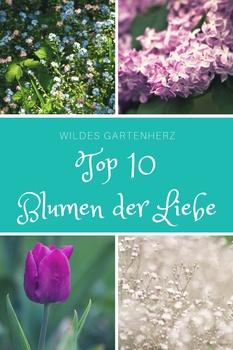 Die Top der Blumen der Liebe!