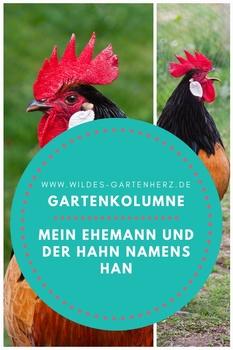 Gartenkolumne - mein Ehemann und der Hahn namens Han