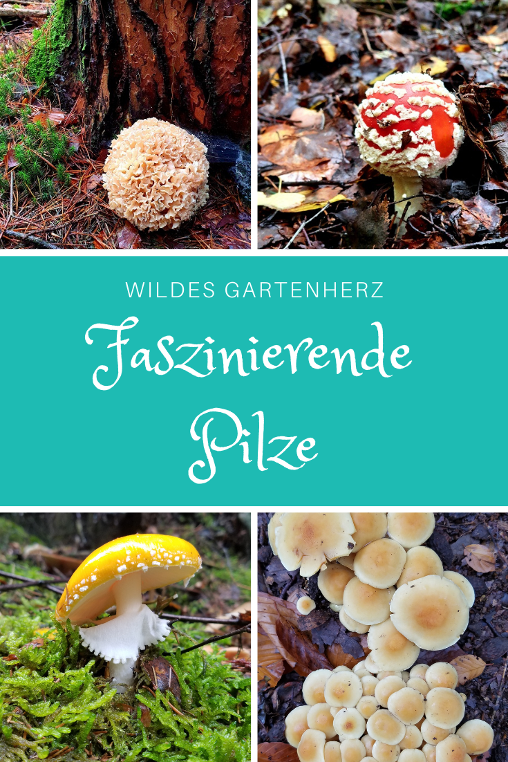 Waldbaden für Gärtnerinnen - Pilze sammeln