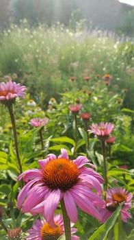 Gartenfotografie - mein Garten im Juli