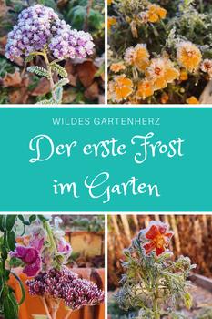 Der erste Frost im Garten