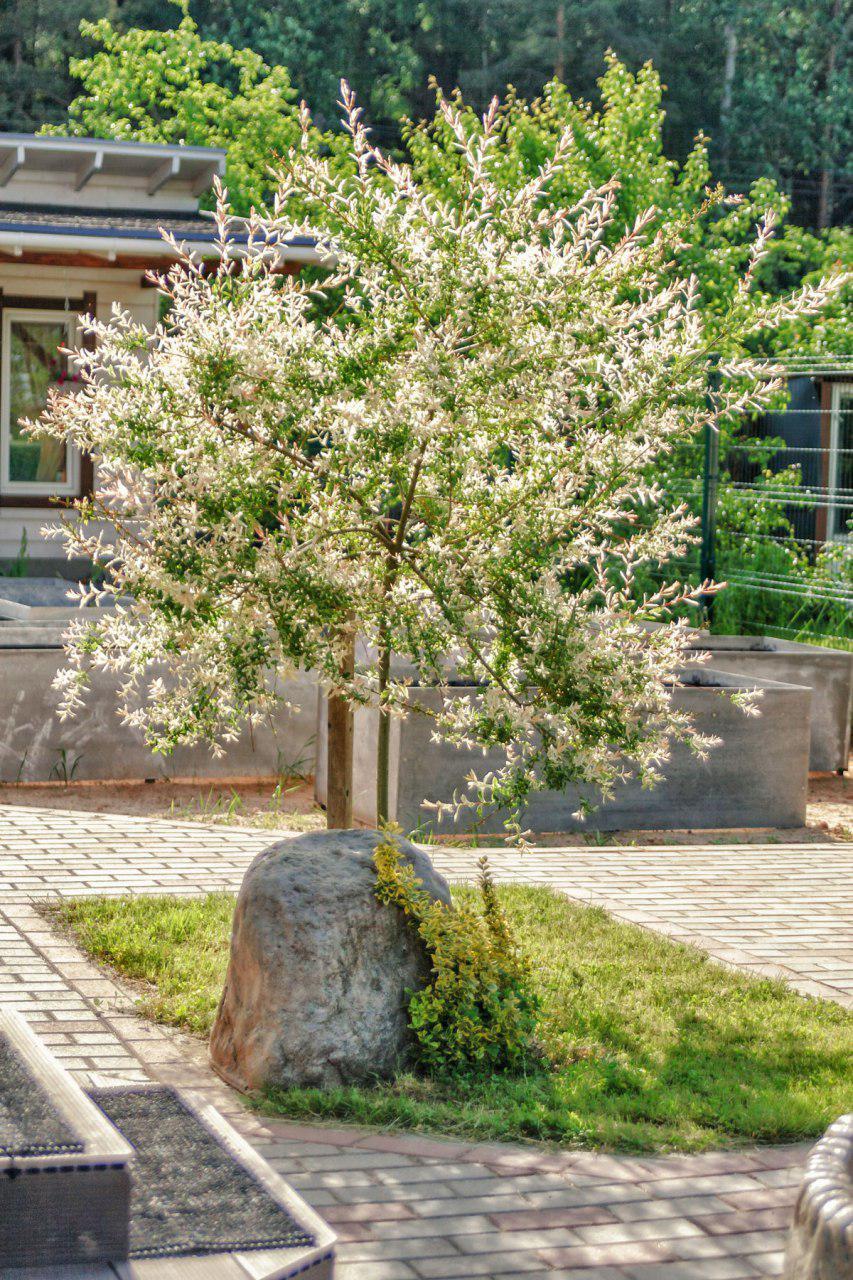 Ein Abdeckstein  im Garten