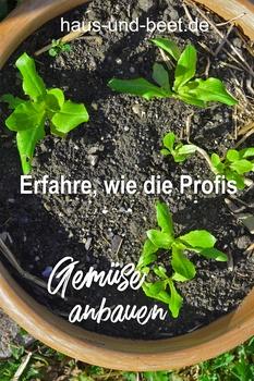 Gemüse anbauen Linkup – So einfach ist Gemüse anbauen