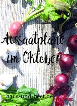 Aussaatpläne im Oktober - Die Nachkultur ist entscheidend