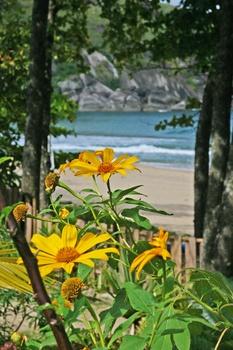 Sonnenblumem am Meer