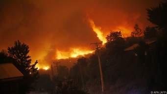 Ökologisch-botanischer Brandschutz