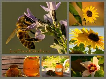 Eigener Honig muss nicht immer der eigene sein