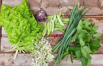 Unser Essen ist wertvoll (und was das Gärtnern uns noch über Lebensmittelve