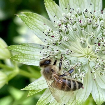 Meine 10 besten Bienenstauden