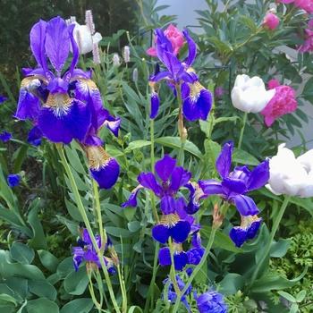 Frühling im Senkgarten