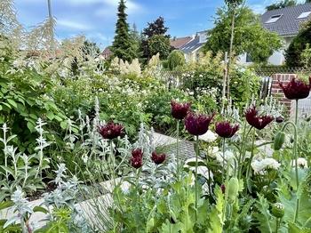 5 Arbeiten für Gärtner im Juli