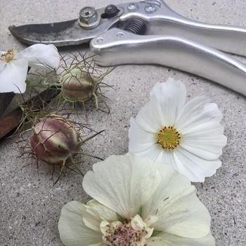 5 Arbeiten für Gärtner im Juni