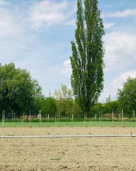 Im Mai ist Saisonbeginn für Pflückgärtner