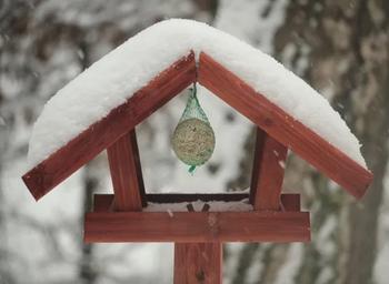 Der Winterbalkon: Vögel füttern nicht vergessen!