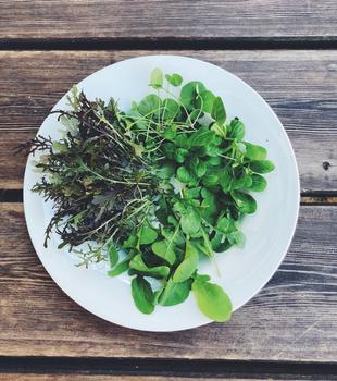 Salat – das perfekte Wintergemüse für den Balkon