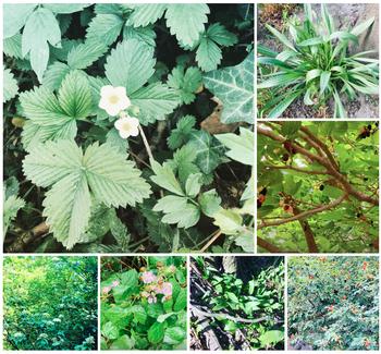 Wildpflanzen für die urbane Selbstversorgung – dein Essen wächst überall!
