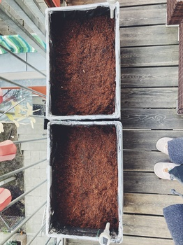 Gemüseanbau auf dem Balkon