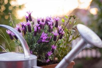 Essbare Balkonpflanzen, die wenig Wasser benötigen