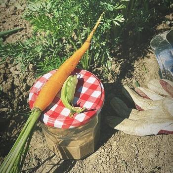 Das erste Gemüse gibts vom Feld auf den Teller