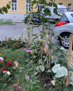Eine Baumscheibe für die urbane Selbstversorgung nutzen
