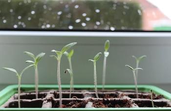 Essbares in der Wohnung anbauen – geht das?