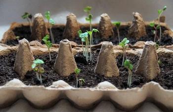 Geldspar- und Recycling-Tipps für den Gemüseanbau auf dem Balkon