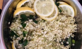 Aus Holunderblüten Sirup zubereiten