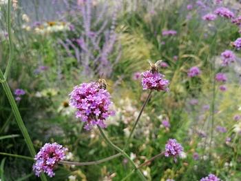 HappBee! So geht insektenfreundliches Gärtnern!
