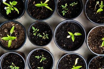 Gärtnern nach dem Mondkalender: So funktioniert's
