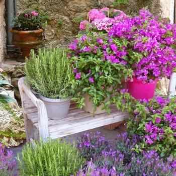 Mit Kübelpflanzen gestalten