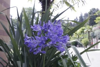 Kann mir jemand sagen wie diese Pflanze heißt?
